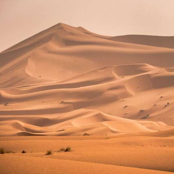 carta da parati dune