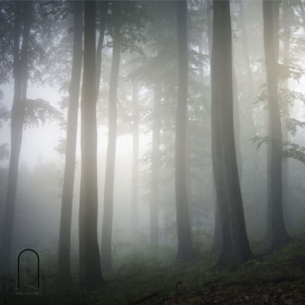 carte da parati fillyourhomewithlove linea foggy tra tronchi