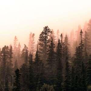 carte da parati fillyourhomewithlove linea foggy