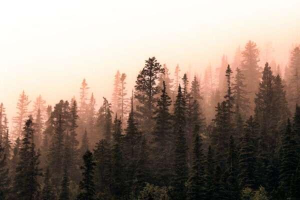 carte da parati fillyourhomewithlove linea foggy nebbia all'alba