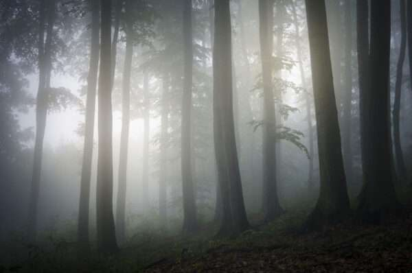 carte da parati fillyourhomewithlove linea nebbia tra tronchi
