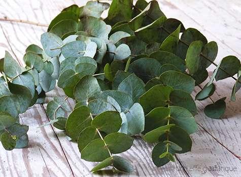 Carta da parati con le foglie eucalipto
