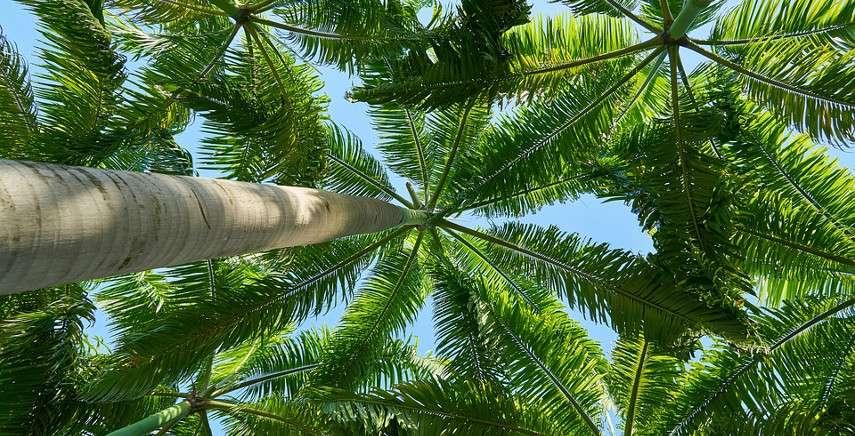 Carta da parati con le foglie palme